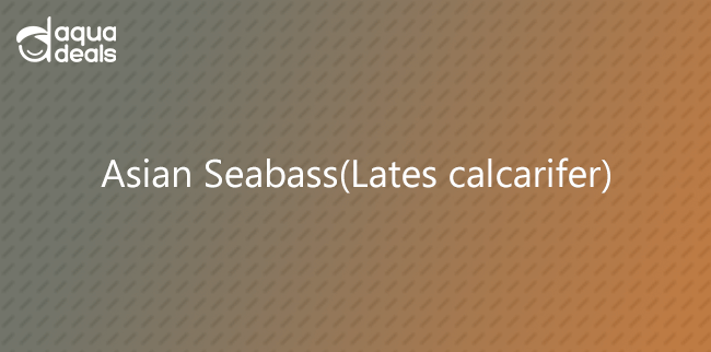 Asian Seabass(Lates calcarifer)