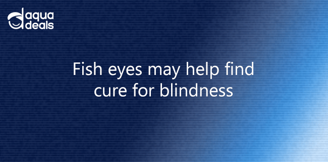 Fish eyes may help find cure for blindness