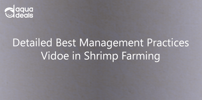 Detailed Best Management Practices Vidoe in Shrimp Farming