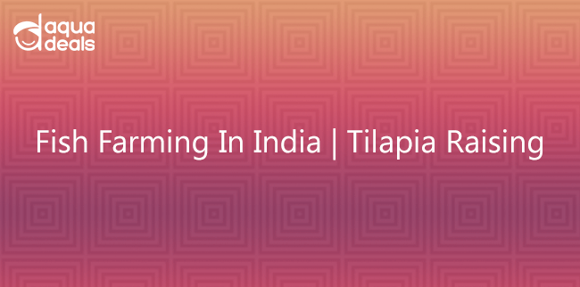 Fish Farming In India | Tilapia Raising