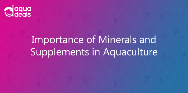 Importance of Minerals and Supplements in Aquaculture