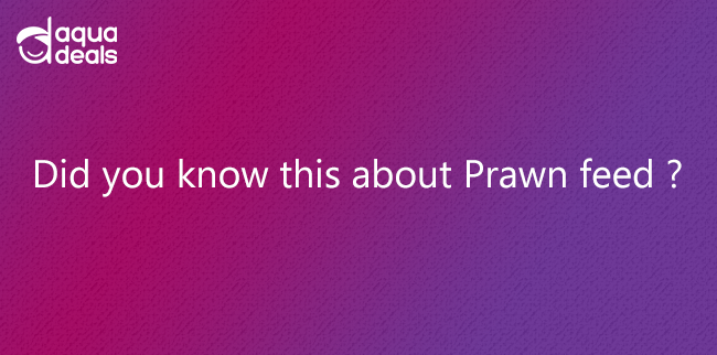 Did you know this about Prawn feed ?