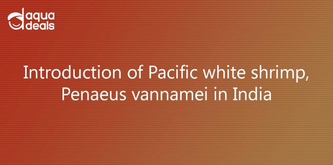 Introduction of Pacific white shrimp, Penaeus vannamei in India