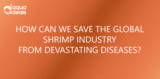HOW CAN WE SAVE THE GLOBAL SHRIMP INDUSTRY FROM DEVASTATING DISEASES?