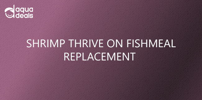 SHRIMP THRIVE ON FISHMEAL REPLACEMENT