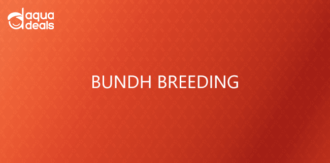 BUNDH BREEDING