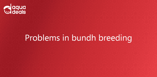 Problems in bundh breeding