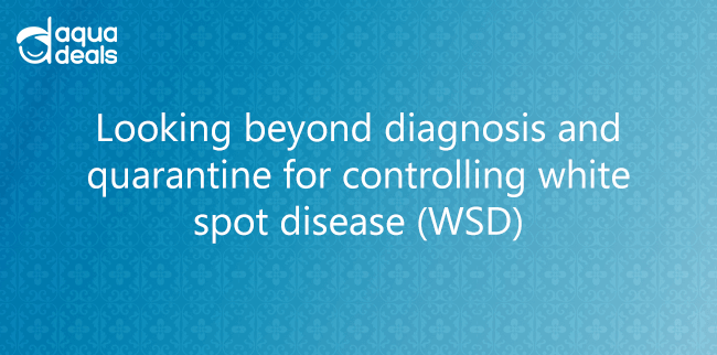 Looking beyond diagnosis and quarantine for controlling white spot disease (WSD)