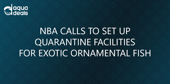 NBA CALLS TO SET UP QUARANTINE FACILITIES FOR EXOTIC ORNAMENTAL FISH