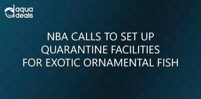 NBA CALLS TO SET UP QUARANTINE FACILITIES FOR EXOTIC ORNAMENTAL FISH