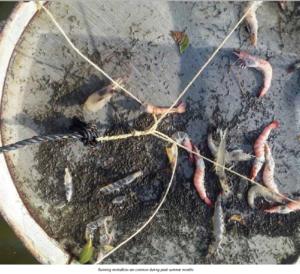 Shrimp Aquaculture – Industry Review – AquaDeals Blog