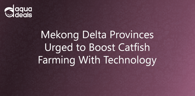 Mekong Delta Provinces Urged to Boost Catfish Farming With Technology