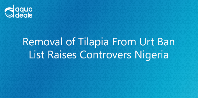Removal of Tilapia From Urt Ban List Raises Controvers Nigeria