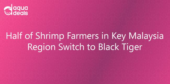 Half of Shrimp Farmers in Key Malaysia Region Switch to Black Tiger